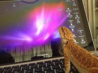 パソコンで調べるフトアゴヒゲトカゲ
